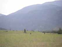 primal quest montana